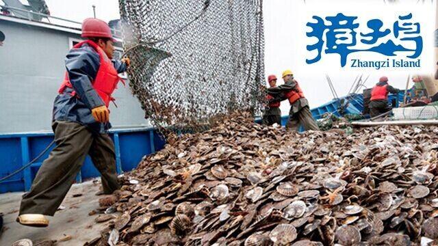 獐子岛8亿元虾夷扇贝遭灭顶之灾 分析师:我们惊呆了