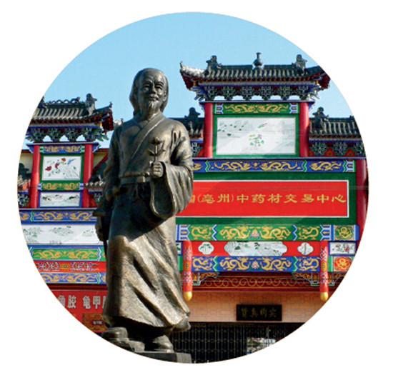 p20-4+亳州中药材交易中心