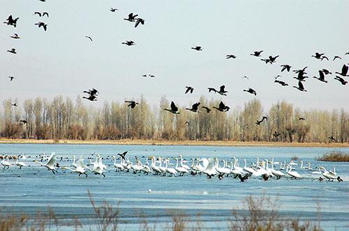 独具特色的河流湿地成为鸟类的天堂