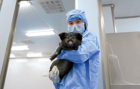 p67-2012 年,亚洲首家、世界第二家医用级动物供体培育中心在湖南省宁乡县启动,标志着我国异种移植治疗糖尿病基础建设已跨入世界顶尖行列。