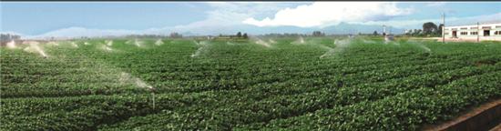 p43 瑞金市叶坪乡现代农业科技示范园区蔬菜基地