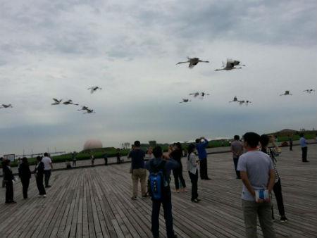 采访团成员争先拍照放飞的丹顶鹤
