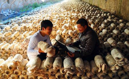 电脑科技种植蘑菇