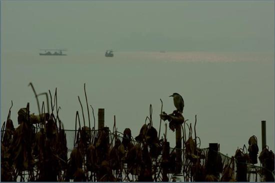 "p49-2 2016年12月9日,浙江省杭州市遭遇""霾伏""。西湖湖面,一片朦胧。"