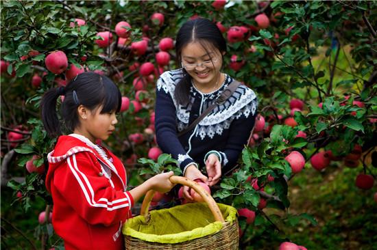 洛宁上戈优质苹果基地