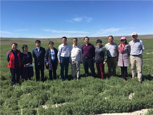 张春银与专家考察团队在绿色覆盖的盐碱地上合影