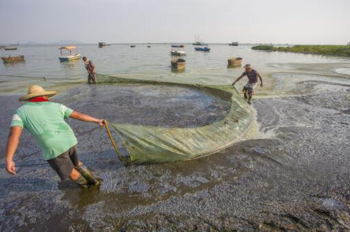 """p30-3 2017 年7 月26 日,安徽合肥,工人在打捞巢湖蓝藻。此次中央环保督察组反馈称,合肥市""""以保护之名,行开发之实""""。"""