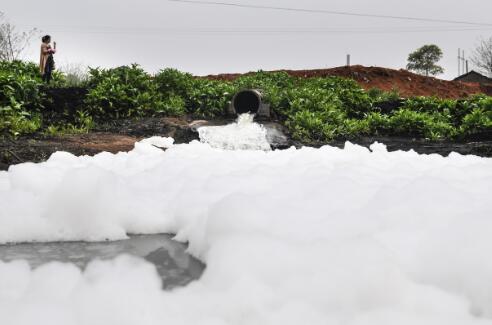 p31-2 2017 年7 月26 日,安徽合肥,工人在打捞巢湖蓝藻。此次中泡沫四处翻滚。此次中央环保督察组反馈称,湖南对大型企业环境问题不敢管、不愿管。