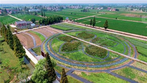 65 崇明区三星镇的一处农场,通过土地整治,土地平坦、水网畅通,便于规模化经营。《中国经济周刊》摄影记者 胡巍 摄