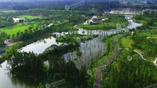 p36-无人机航拍上海长兴岛郊野公园,林地,草地,湿地交错.