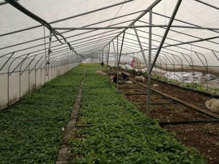 红古区马铃薯育种基地。摄影 李开南