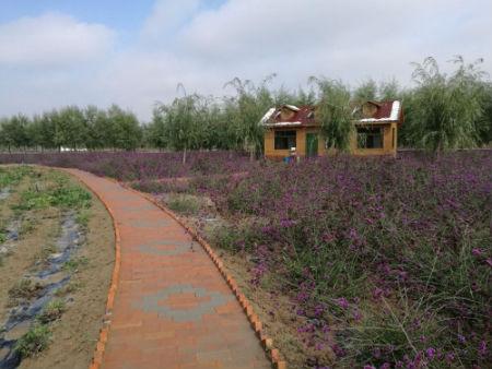 红古区农业文化旅游景区。摄影 李开南