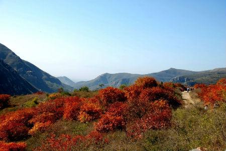 河南汝州大峪镇建设生态旅游 红叶绘就壮美画卷