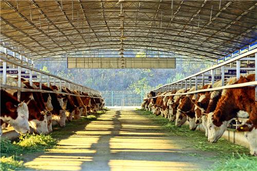第一扶贫牛超市