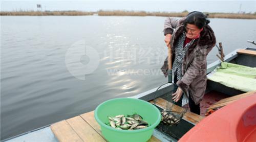 """20-2 未来白洋淀将逐步恢复它""""华北之肾""""的功能。《中国经济周刊》摄影记者 胡巍 摄"""
