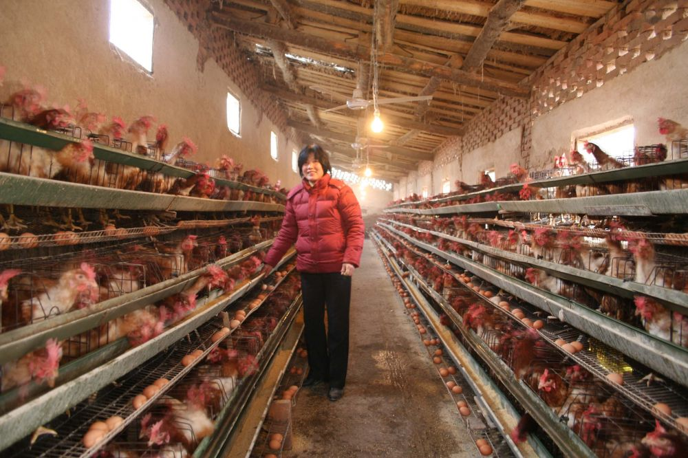 4  农户规模化蛋鸡场