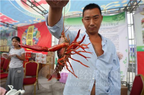 9 在举办开幕式的龙虾广场,设有展台摊位,展示和出售龙虾及各类鱼特色台农产品。