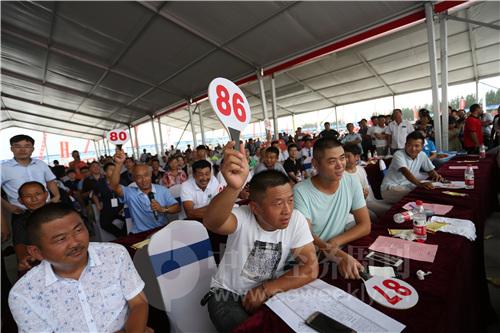 31 虾王、虾后的拍卖现场,人们竞相举牌。