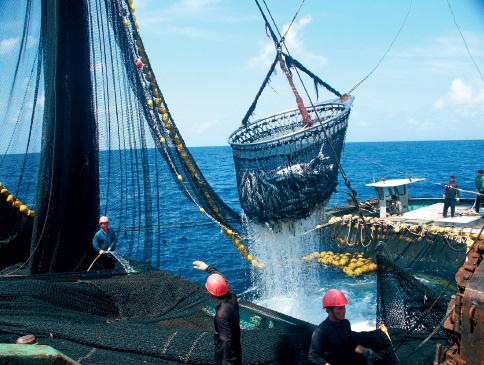 38 中西太平洋大型金枪鱼围网捕捞场景