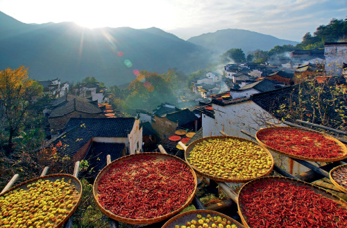 """52-3 8 月底,在江西上饶婺源县篁岭古村,当地村民们迎来了每年的农作物丰收""""晒秋季"""",房前屋后的晒架上尽是收成。观赏""""晒秋""""也成了当地独特的民俗文化体验。"""