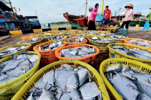 52-1 9 月起,海南琼海,渔民加紧出海捕捞作业,一艘艘渔船陆续返港卸下渔获,源源不断地供应各地市场。