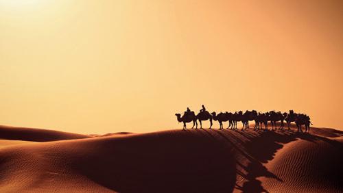 42-4 喀什,沙漠深处,一支驼队顺着沙丘的曲线,摇曳而来。