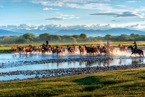 42-1 夏季,昭苏大草原水草丰盛,每天正午都会有大批的伊犁马来到河里饮水洗澡,马儿互相追逐嬉戏,踏起阵阵浪花,场面十分壮观。