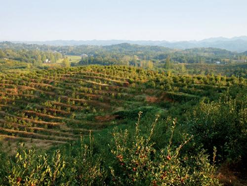 105-2 六安市裕安区伊甸园油茶种植专业合作社万亩油茶产业扶贫基地。