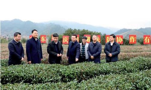 p87-鼎湖区委书记陈宇航(左四)率队考察昭平县有机茶基地。