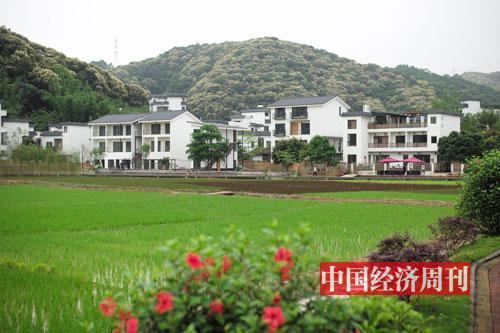 """96--米埗村打造的""""网红稻田""""-《中国经济周刊》首席摄影记者-肖翊_-摄"""
