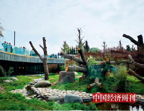 p106-3 哥本哈根动物园熊猫馆。《中国经济周刊》记者 张伟I 摄