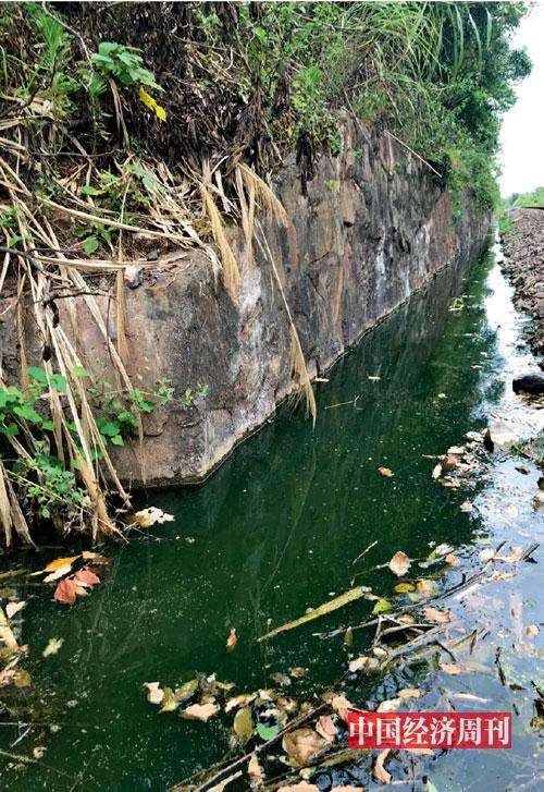 P91位于病死畜禽无害化处理中心下方的污水沟。《中国经济周刊》记者-李永华_-摄