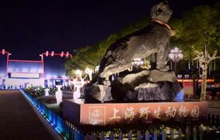 到上海看国内首个夜间动物园!