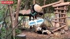 我與大熊貓有個約會
