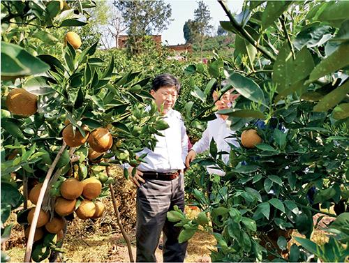 """p87-2 邓院士在秭归帮助当地开发新品种,该品种因皮色较深名为棕橙,谐音忠橙,也是""""屈原故乡的橙子""""。"""
