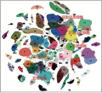 79 人體102 種細胞大類圖譜