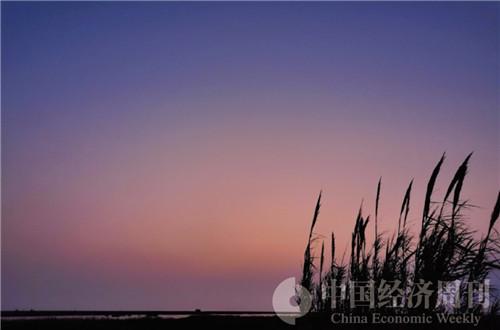8东滩湿地公园  摄影《中国经济周刊》记者 王雨菲