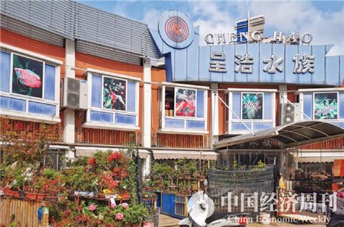 11岚灵花鸟市场  摄影《中国经济周刊》记者 王雨菲