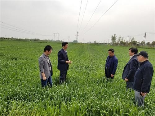 1、华班安(中)与张瑞宏(左二)在种植基地调研