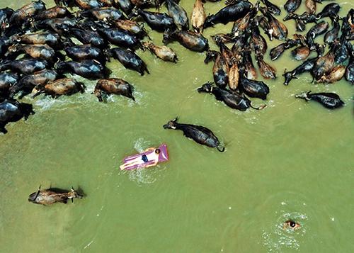 44 当地时间2020年7月13日,土耳其天气炎热,人与水牛共同在河中泡澡降温。