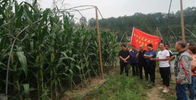 """略阳县农业农村局:抓住产业扶贫这一""""牛鼻子"""""""