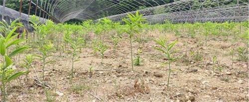 tiny-crop-1610003367685