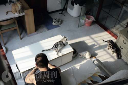 52-1 为了春节回家,家铭给7只猫准备了两个自动换猫砂的机器和两台自动喂食机,测试过能够7只猫生存7天。