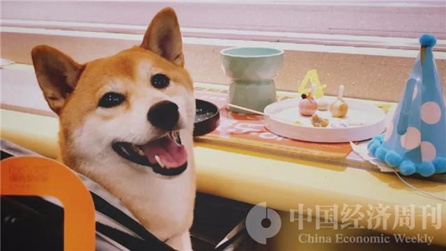 """首家""""非人类""""餐厅   专供宠物的米其林摆盘充满仪式感"""